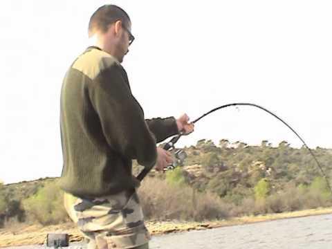 P che du silure au poisson mort youtube - Peche du poisson chat au coup ...