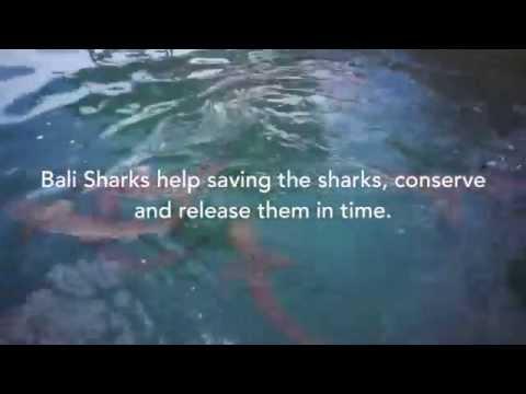 Bali Sharks   Serangan Island 09.06.15