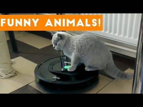 Top 100 Funny Pets on Vine | Cute Animal Videos 2017