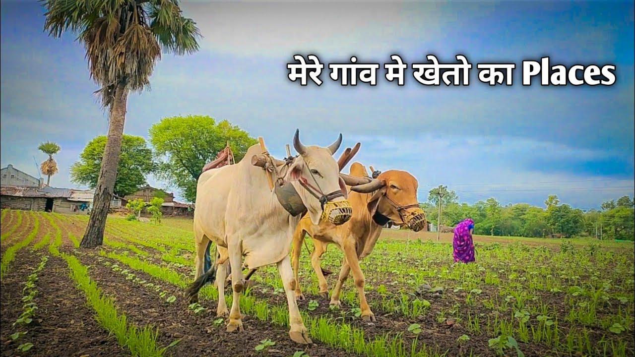 farming in india - adivasi farmers - indian kheti - आदिवासी खेती - village farmer