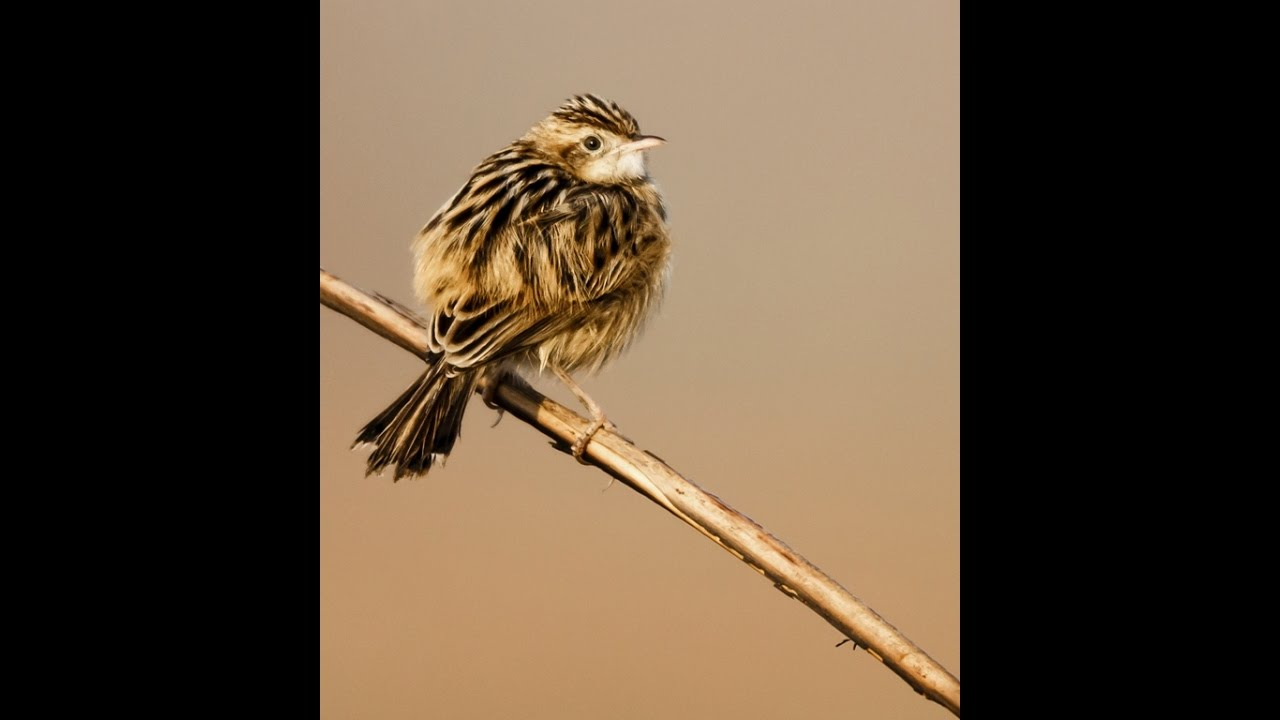 Bird Photography With Tamron Sp 150 600mm F50 63 G2 Af A022 Lens F 5 Di Vc Usd For Canon Ef