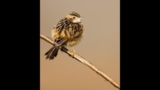 bird photography with tamron sp 150 600mm f5 0 6 3 g2 af a022 lens