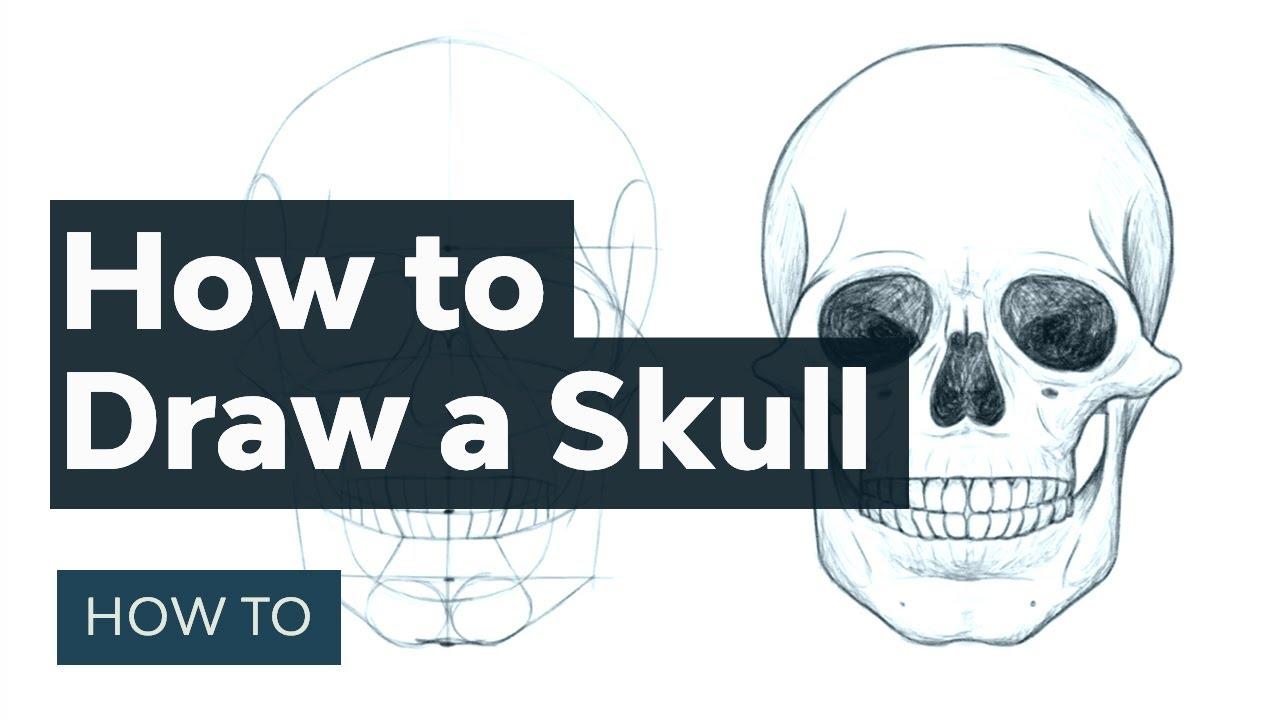 Easy Beginner Skull: How To Draw A Skull