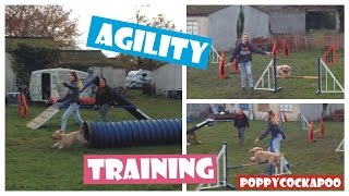 Dog Agility Fun 12 - Cockapoo Training