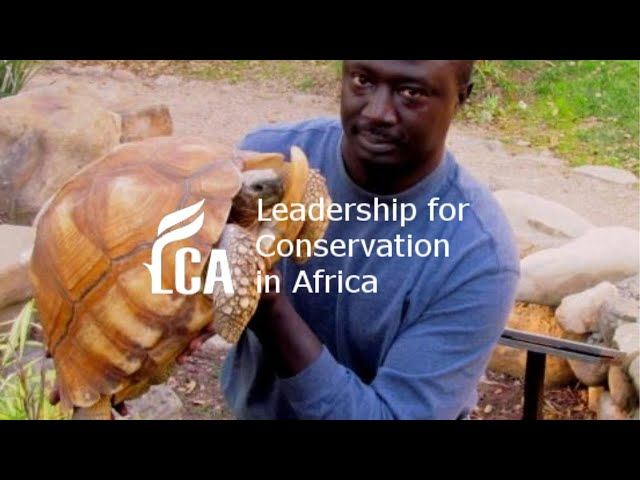 Saving African freshwater turtle and tortoises