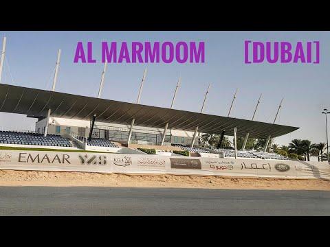 AL MARMOOM 🇦🇪[DUBAI ]JULY 2019