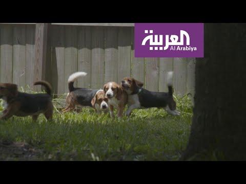 #صباح_العربية: كلاب للكشف عن السرطان