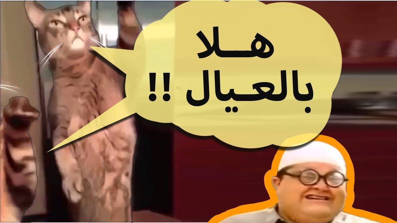 كوكتيل قطط مضحكة مدبلج عربي   شيلة قطط !!