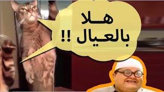 كوكتيل قطط مضحكة مدبلج عربي | شيلة قطط !!