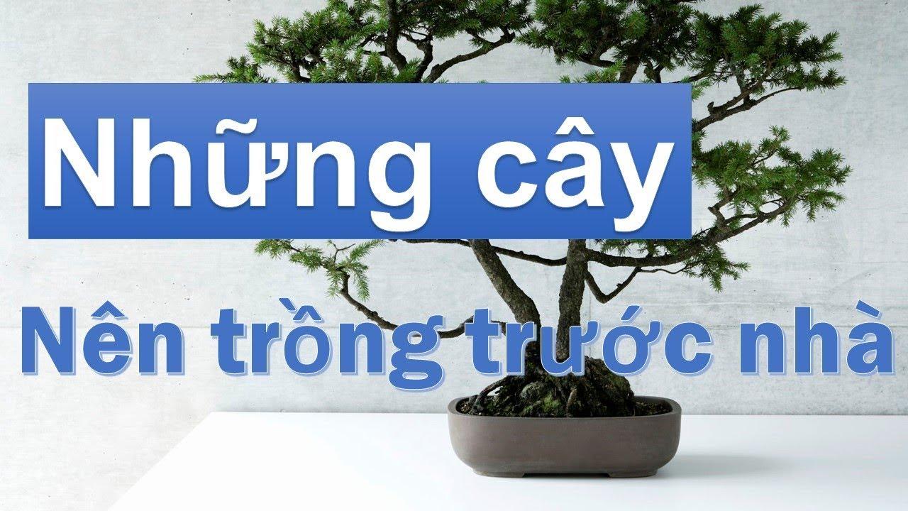 Những loại cây nên trồng trước nhà để đón tài lộc, xua tà khí
