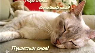 Спокойной ночи! Пушистых снов!