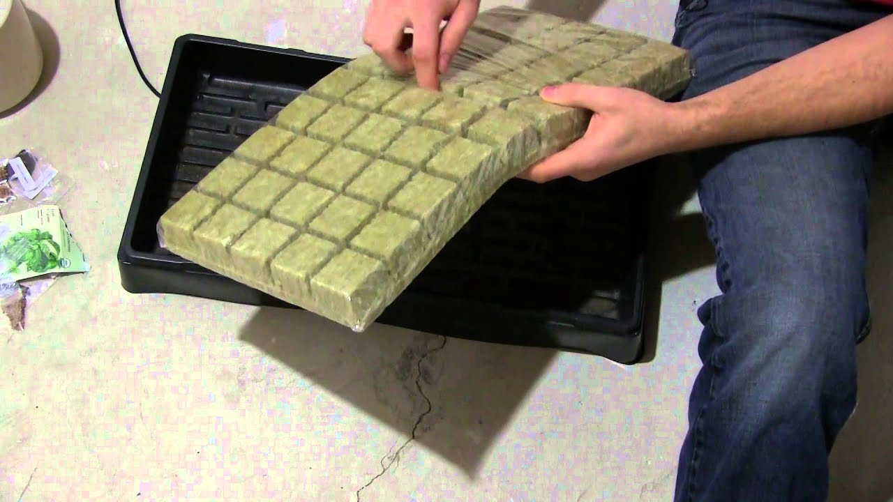 How To Start Seeds For Hydroponics For Beginners Ez Youtube