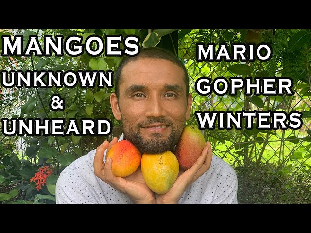 Mangoes Less Known: GOPHER, WINTERS, MARIO