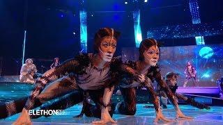 Les CATS envahissent le plateau du Téléthon 2015 - 04/12/2015