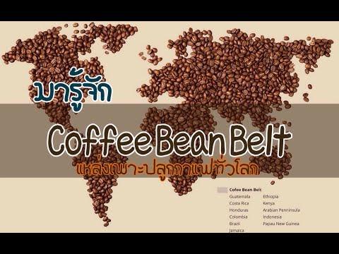 """มารู้จัก """" Coffee Bean Belt"""" แหล่งเพาะปลูกกาแฟทั่วโลก ตามแนวเส้นศูนย์สูตร  KoffeeWanderlust"""