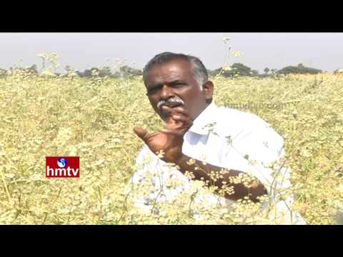 Success Story Of Ajwain Cultivation By Farmer Madhusudhan Reddy | Nela Talli | HMTV