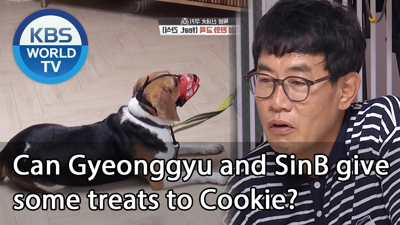 Can Gyeonggyu and SinB give some treats to Cookie? [Dogs are incredible/ENG/2020.08.05]