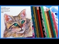 Cat in Watercolor & Colored Pencil SPEEDPAINT