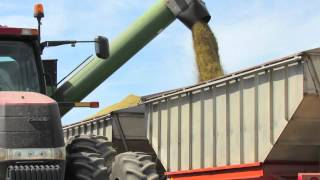 Rice transfer in Sutter County