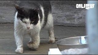 앞발이 꺾인 어미 고양이가 끝까지 지켜낸 것 ㅣ Mother Cat Protects Her Kitten Though Her Foreleg Is Twisted