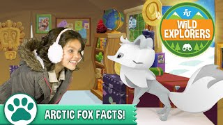 Wild Explorers - Arctic Fox Facts