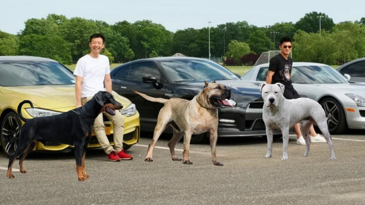 10 Dogs Most Liked by Rich People