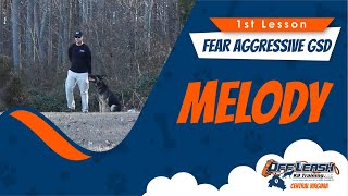 1st Lesson, Gsd, Fear Aggression