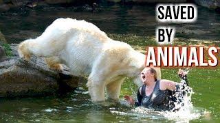 Animals Saving Humans Life! ⭐Heroic Animals⭐️