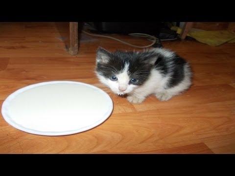 Как кормить котенка 1 месяц без кошки в домашних условиях