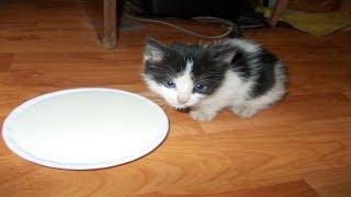 Как ухаживать и чем кормить котят от 1 месяца