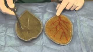 Aural Hematoma Repair