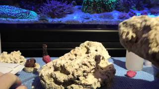 Mount coral frags securely.