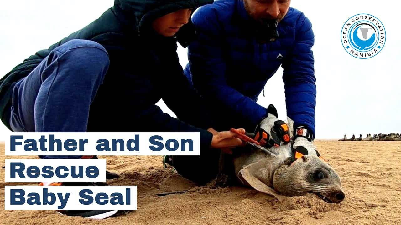 Father and Son Rescue Baby Seals from Entanglements