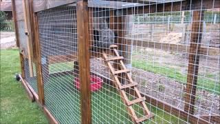 Einzug der Hühner