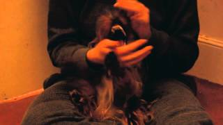 Living With Chichi The Yorkshire Terrier Puppy... (feat. Adorable Sneeze)