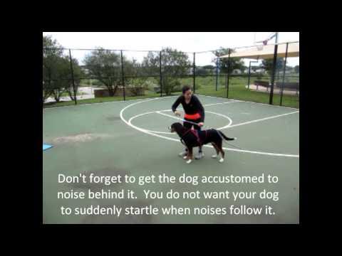 Teaching your dog to cart / draft (Greater Swiss Mountain Dog)