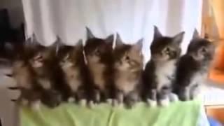 FANNY CATS Смешные коты Коты танцуют под музыку Котосмех