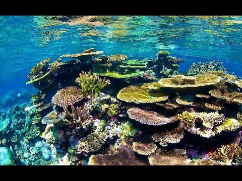 Top Tourist Attractions in Port Douglas (Queensland): Travel Guide Australia