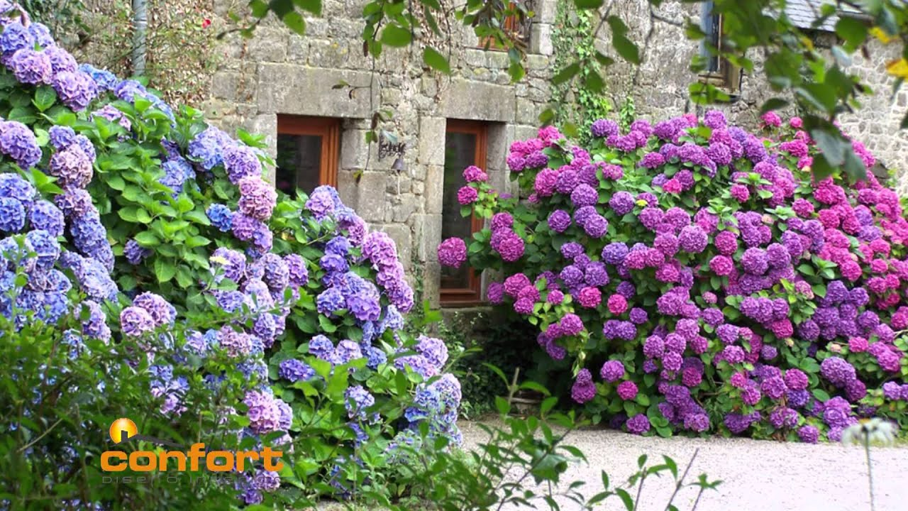 Vivero alegr a hortensias youtube for Jardines con hortensias