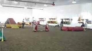 German Shorthair Indoor Agility Run