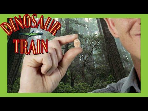 Conifers - Dinosaur Train - The Jim Henson Company