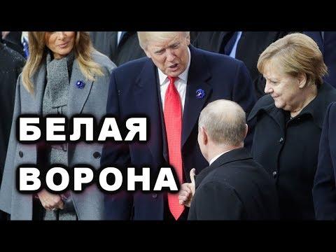 Путин прилетел в Париж клянчить встречу с Трампом - Видео онлайн