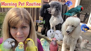 Morning Routine with my Pets | Feeding my Pets Breakfast