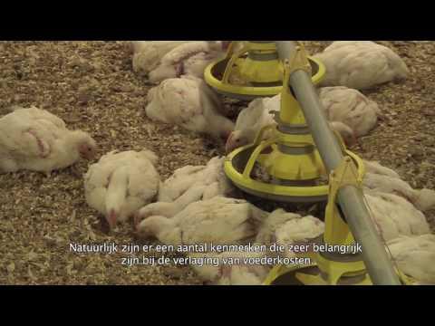 Herveld -  Centre of European Genetics (with Dutch Subtitles)