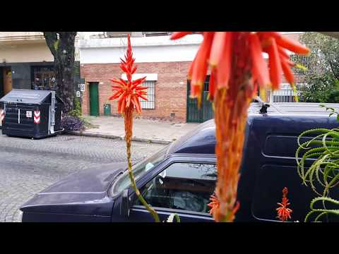 Winter. 5 minutes in Buenos Aires! Argentina. Ford Falcon. 4K UHD.