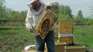 Пчёлы на садовом участке. № 1