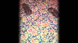 Картинки с хомячками:):););)