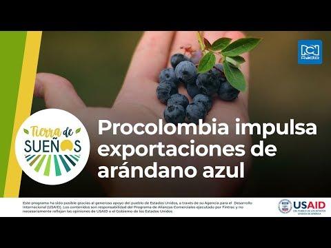 Procolombia Impulsa Exportaciones De Arándano Azul