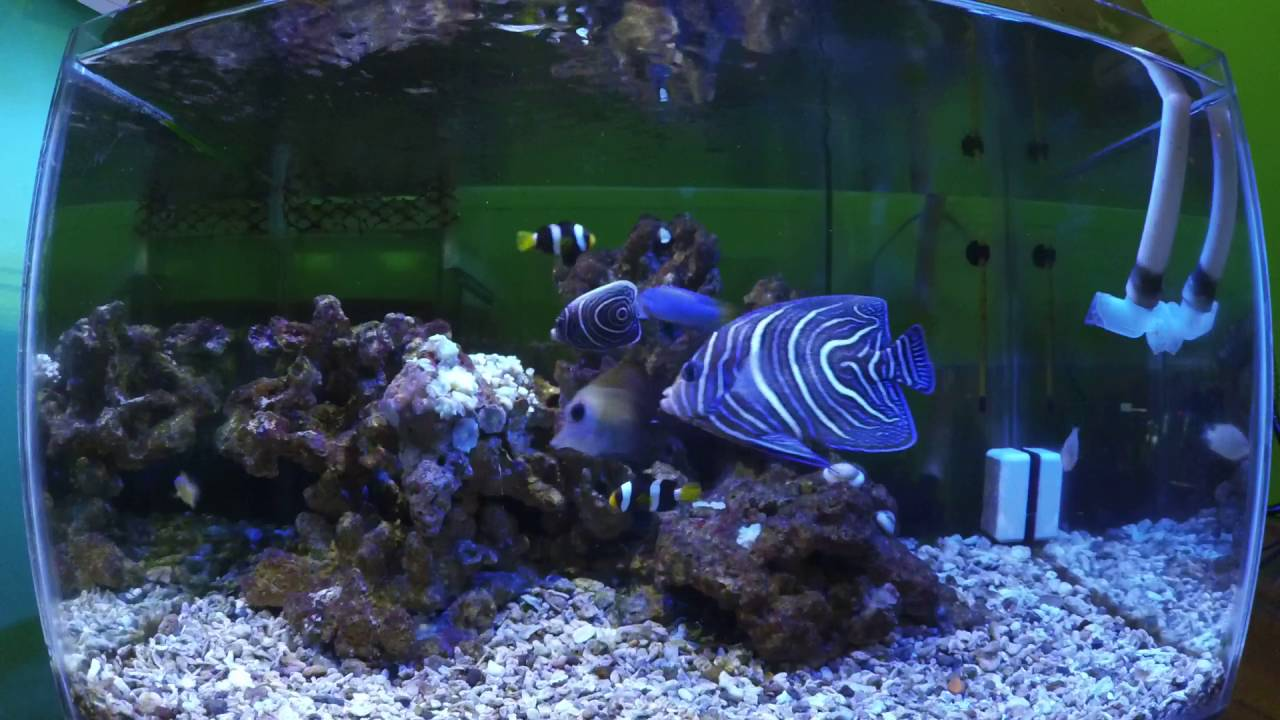 Aquarium Air Laut Sederhana Fish Only Youtube Aquarium air laut sederhana