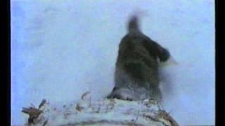 Pod severnym siyaniyem (Under Aurora) -- 1990 -- Toshio Gotô